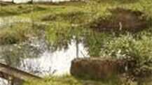 Amphibian pond with fencing